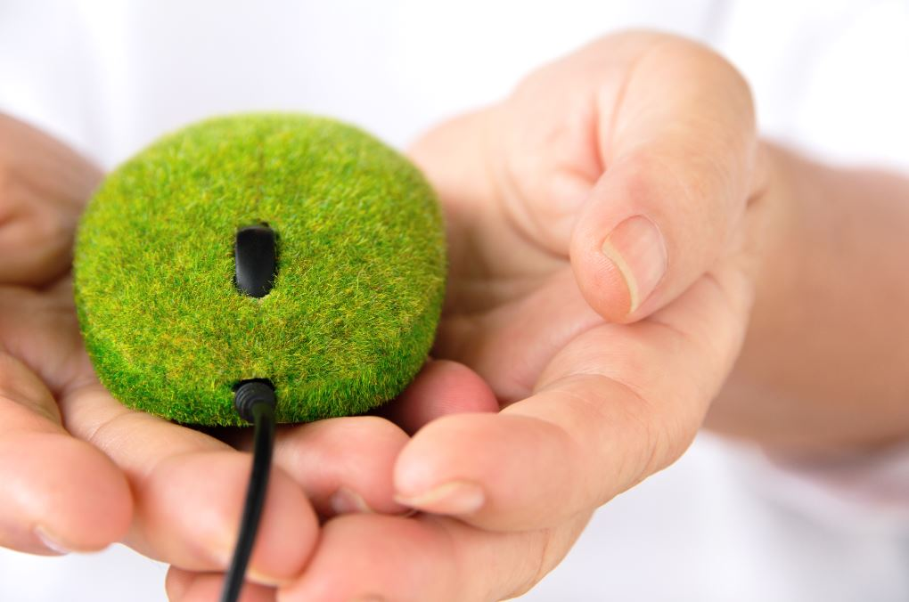 Green mouse, photo from iStock